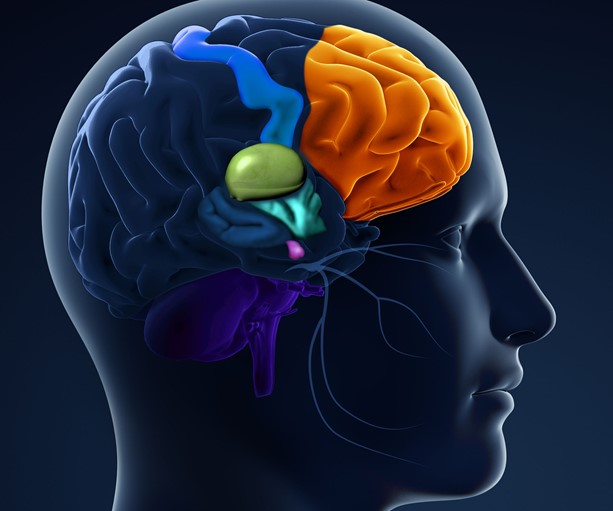 Prelaunch Physician Education In Neurology